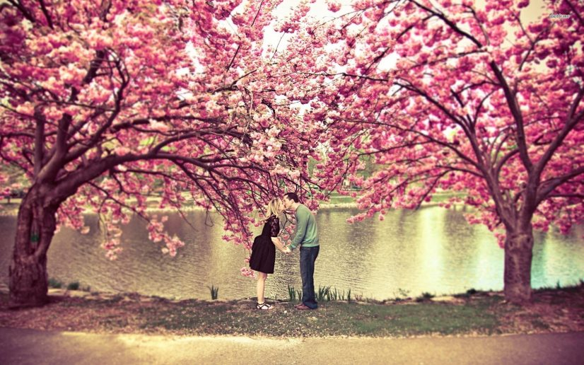 Couple Kissing Under Cherry Blossoms